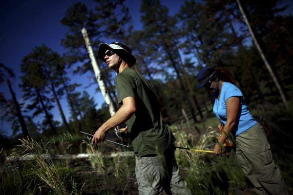 Timmons and Springer work in the Apache-Sitgreaves National Forests, which were burned during last year's Wallow Fire. The largest fire in Arizona history, Wallow barreled through a half-million acres of forest.