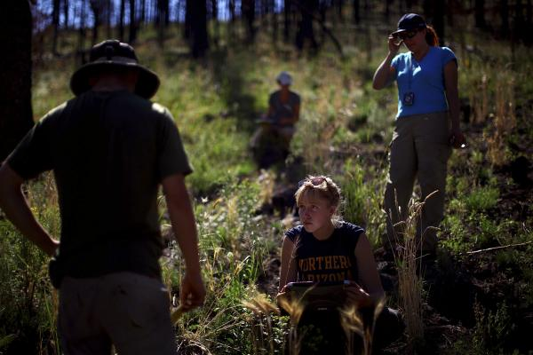 Northern Arizona University students Zac Timmons (left) and Karen Kralicek (center) work with plant ecologist Judy Springer in the Apache-Sitgreaves National Forests in east-central Arizona. They are studying the effects of forest restoration treatments following the Wallow Fire of 2011.