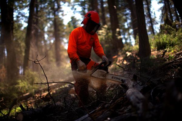 Contract foresters work on a thinning operation in Los Griegos Peak, on U.S. Forest Service land in the Jemez Mountains.