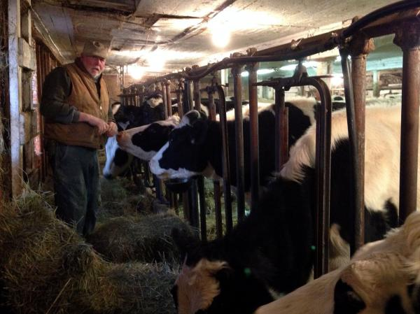 "Dairy farmer Bob Andrews feeds heifers in the same barn his grandfather used. He says today ""the harder you work, the further you get behind."""