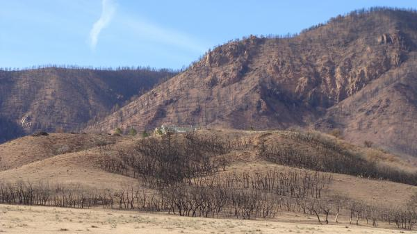 """Janet Wilson describes the charred hillsides above her old home as """"a vast area of toothpicks."""" She found the scene too sad to return to."""