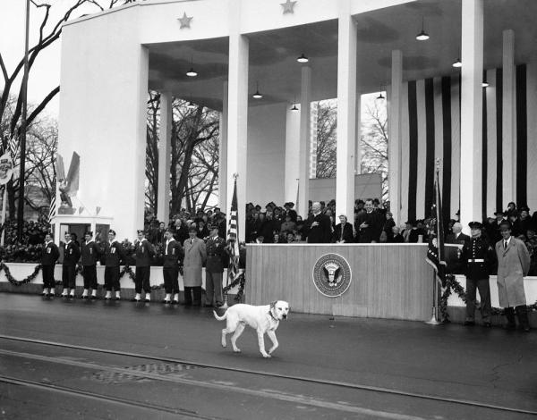 In a less choreographed moment that same year, Vice President Richard Nixon laughed as a stray dog joined the parade.