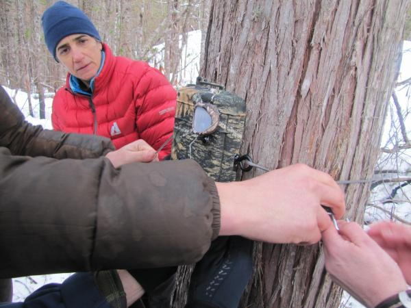 Volunteers with Adventurers and Scientists for Conservation set up motion-activated cameras in remote parts of Olympic National Forest in search of the American Marten.