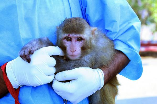 The monkey Iranian authorities said was sent to space.