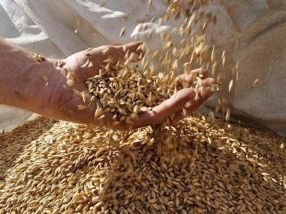 Valley Malt, in Hadley, Mass., works with 25 farmers growing six different types of grain in the Northeast.