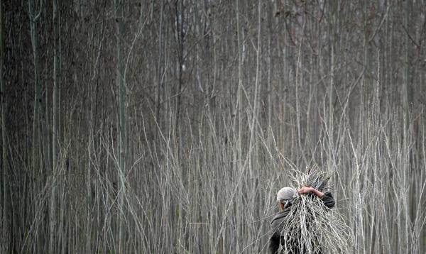 An Afghan carries a bundle of wood in Kunduz province on March 30, 2012.