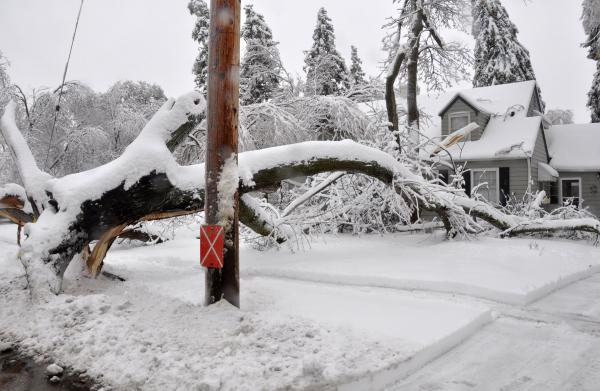 A large, uprooted tree lies across the yard of a house in Sioux Falls, S.D. on Thursday. An ice storm followed by more than 6 inches of heavy, wet snow downed trees and power lines across the city. Forecasters are calling for another six to 12 inches this weekend.