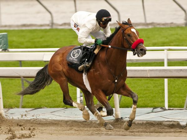 Kevin Krigger rides Goldencents during a six-furlong workout at Santa Anita Park in Arcadia, Calif., in January.