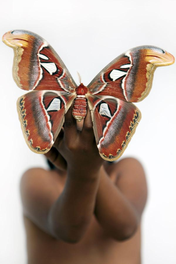 <em>Atlas moth</em>