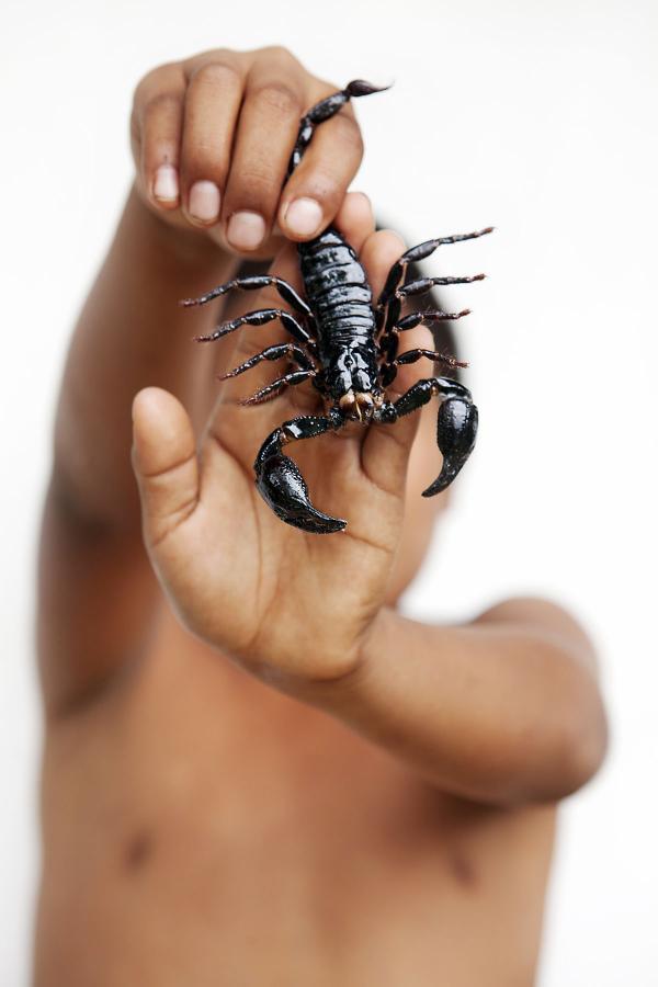 <em>Scorpion</em>