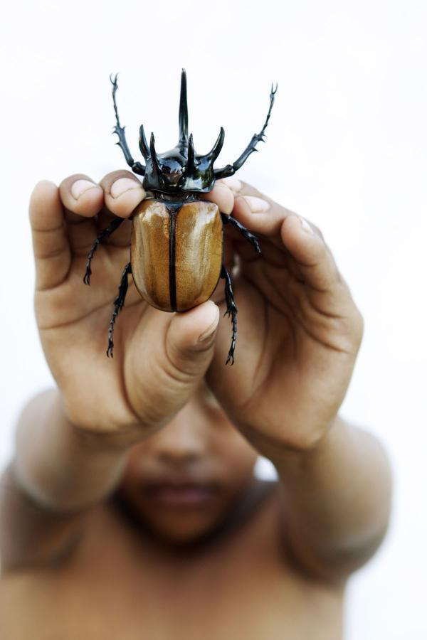 <em>Rhinoceros beetle</em>