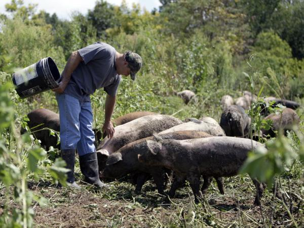 Russ Kremer with some of his hogs on his farm in Frankenstein, Mo., in 2009. Instead of buying conventional feed, Kremer grazes his hogs in a pasture, and grows grains and legumes for them.