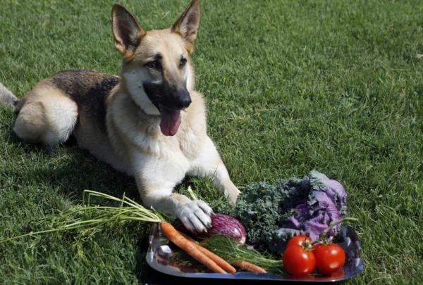 Producers of farm-to-dog-bowl food say the concept is more about locavorism and sustainability than about pampering pooches.