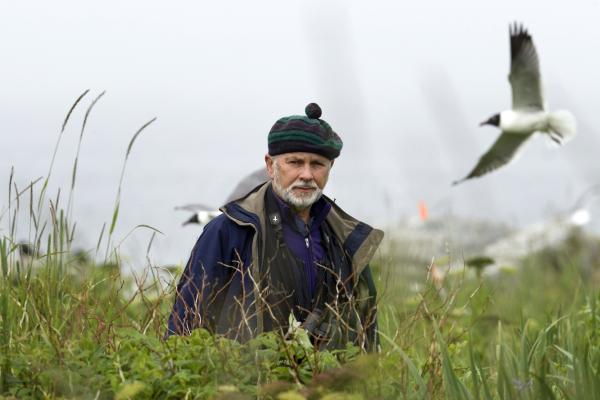 Stephen Kress walks through tall vegetation on Eastern Egg Rock. He led the effort to recolonize puffins on the 7-acre island.