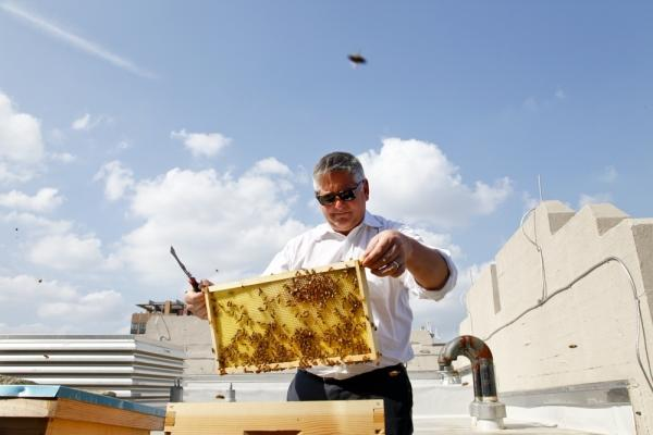 Beekeeper Jeff Miller checks the hives on NPR's green roof.