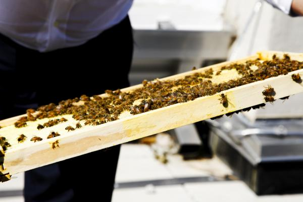 Despite a significant setback at the beginning – one of the queen bees arrived dead and had to be replaced – the NPR hives look healthy and strong.