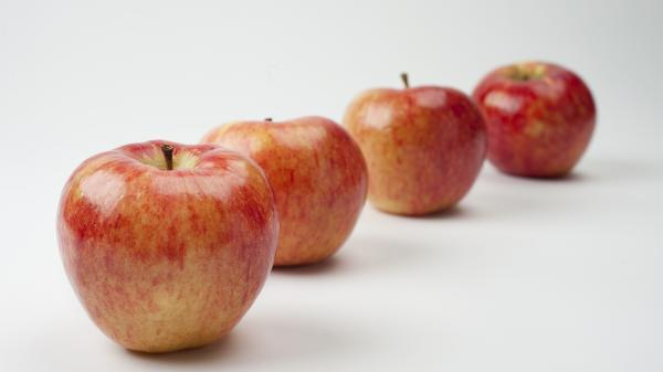 The just-released Riverbelle is one of well over 100 new apple varieties to hit markets around the world in the past six years.