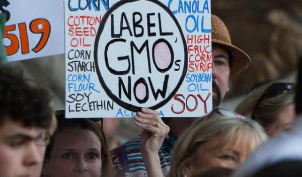 Protestors show their support for labeling genetically modified crops. Researchers have reached differing conclusions about the crops' effect on the environment.