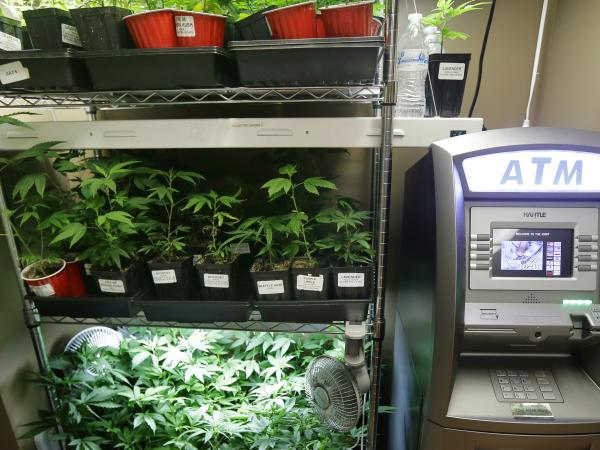 An ATM sits next to a rack of marijuana clone plants that are used to grow medical marijuana on Wednesday at The Joint, a medical marijuana cooperative in Seattle. Last week Washington became the second U.S. state to adopt rules for the recreational sale of marijuana.
