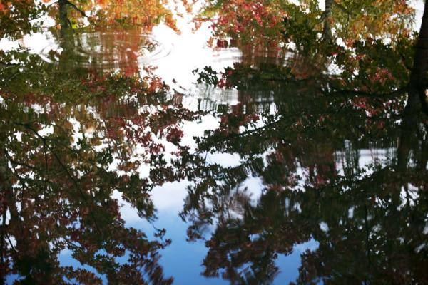 Fall colors reflect in the Bosque, a plaza of four reflecting ponds which contain 40 trees, at The Oregon Garden.