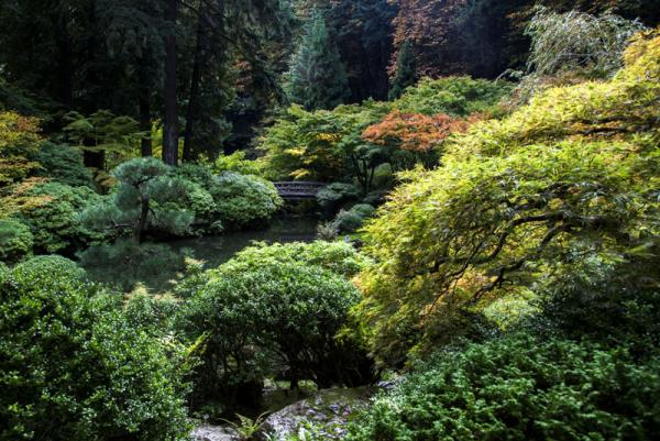 Fall colors surround the authentic moon bridge is a feature in the Strolling Pond Garden at the Portland Japanese Garden.