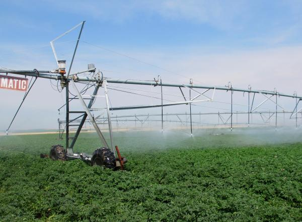 Jim Tiede uses a pivot irrigation system to water his potatoes, so his crops have been growing despite the drought.