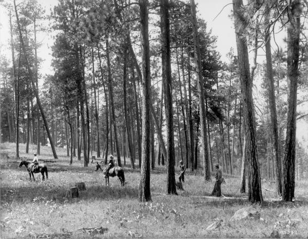 <strong>1909.</strong> Facing nearly due west from ridge northeast of Como Lake. Light selection cut in open ponderosa pine. Ground cover is comprised of perennial grasses and forbs, including basalmroot. A few low-growing bitterbrush plants can be seen in the vicinity of horses and in distance on left. A group of willows can be seen behind horsemen at left center. (Original captions)