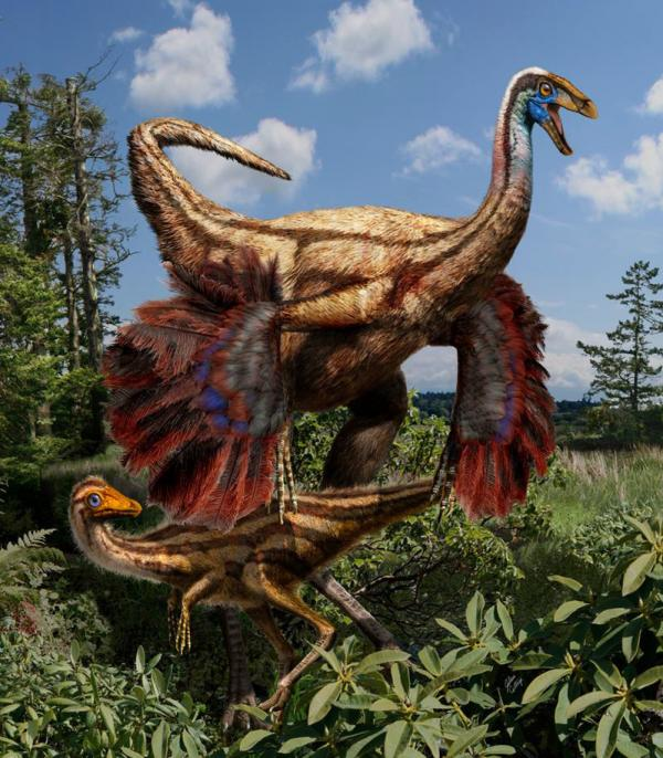 This artistic interpretation shows an adult and juvenile feathered <em>ornithomimid </em>dinosaurs.