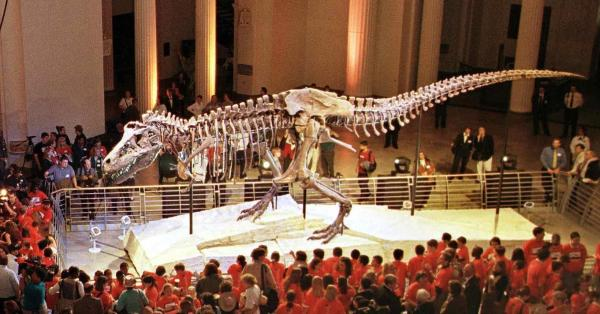 """Sue,"" the <em>Tyranosaurus rex</em> skeleton, is one of the most famous exhibits at Chicago's Field Museum of Natural History"