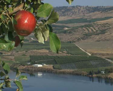 Washington state's apple production increased by 16 percent in 2012 over 2011.