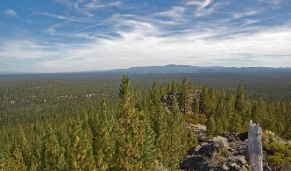 Gilchrist State Forest is located 45 miles south of Bend, Ore. The state is looking to incorporate 29,000 acres into the forest to increase environmental, economic and recreation opportunities in the area.