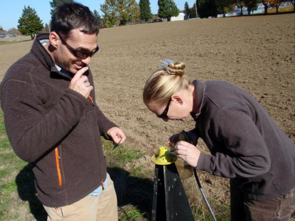 OSU entomologist Vaughn Walton and Wilbur-Ellis agronomist Michelle Armstrong check a trap for stink bugs near Aurora, Ore.