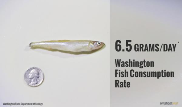 An illustration of the amount of fish that can be safely consumed each day under Washington's current fish consumption standards.
