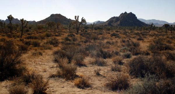 Mojave Desert (Graham/Flickr)