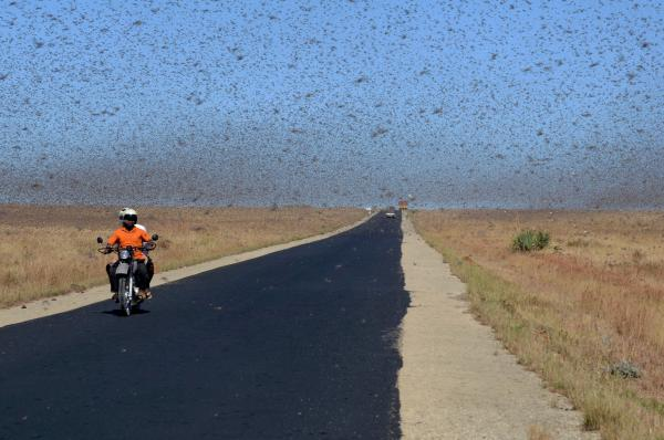 Swarms of locusts in Madagascar, or clouds of elementary particles, without sound, odor, flavor or color? Reality is harder to pin down than you first might think.