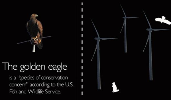 Our infographic explains how wind turbines pose dangers to golden eagles and other types of birds.