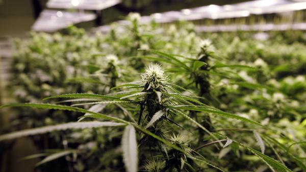 Legalized marijuana in Colorado and Washington state may open the door to a new kind of tourism.