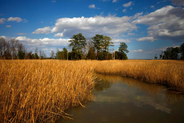 A brackish marsh separates most of Jamestown Island from the Virginia mainland.
