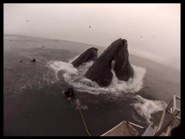 Those are two whales coming up from the water, just feet away from two divers off the coast of central California. The image is from a video, which has gone viral, taken on Saturday.