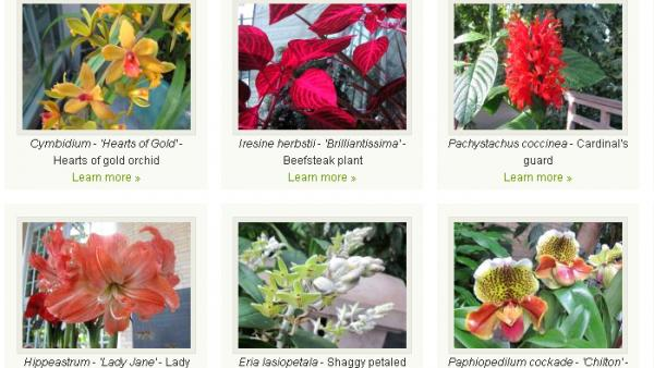 The U.S. Botanic Garden, which is closed because of the government shutdown, says a small staff is looking after its plants. The garden's website still highlights part of its collection that's in bloom.