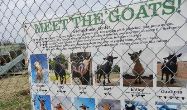 Each of the goats is identified by name and friendliness rating. One of the goats is pregnant.
