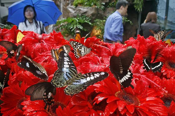 The Butterfly Garden in Terminal 3 is just one of the pleasant diversions at the Changi airport in Singapore.