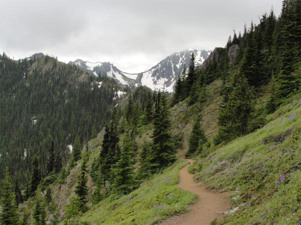 File photo of Mount Townsend Trail in the Olympic National Forest