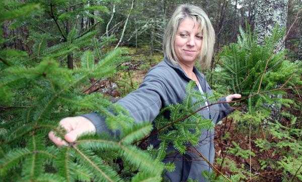 Wanda Pinkham pinches tips off a balsam fir to fashion into Christmas wreaths. Pinkham has permission from a landowner to harvest tips, but others don't bother to ask.
