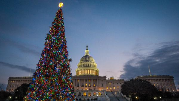 The U.S. Capitol Christmas tree is lit against the early morning sky on Dec. 4.