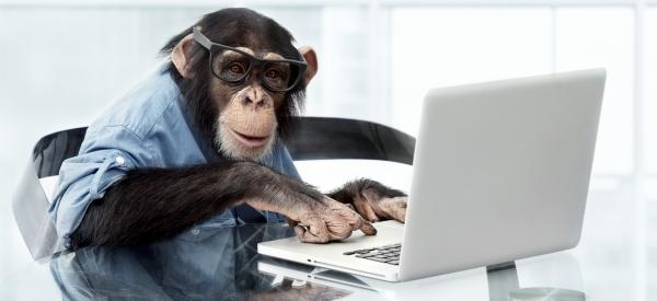 Just give me* some time and I'll get you some copy! (*For the record, this is not actually a monkey; it's a chimpanzee. It's the best we could do, under the circumstances.)