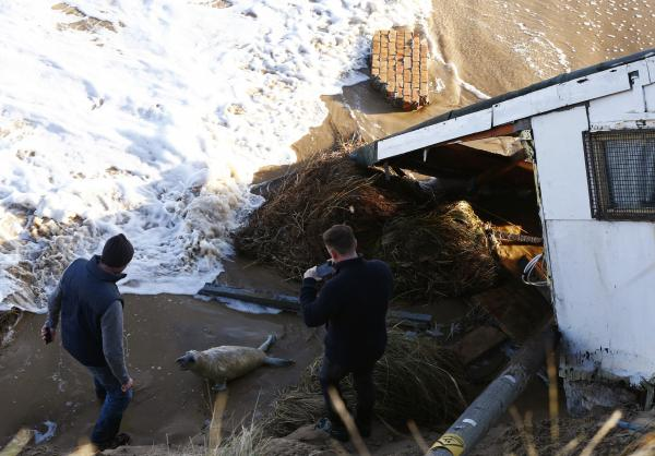 Men take pictures as they try to move a seal pup away from a house, which has fallen into the sea, during a storm surge in Hemsby, eastern England, on Dec. 6.