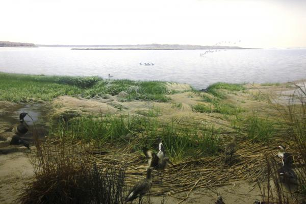 Eastern Coastal Birds diorama