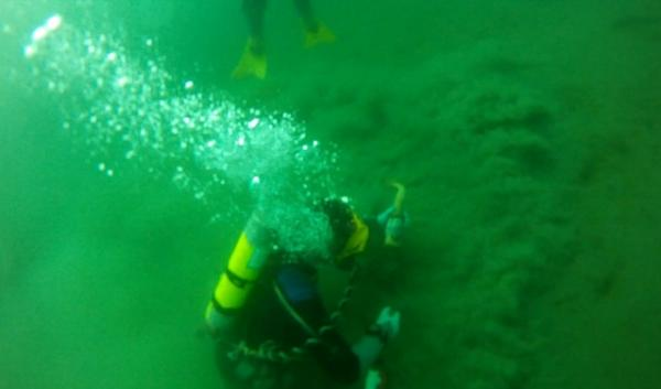 This diver is legally harvesting wild geoduck from 40 feet below the surface of Puget Sound.