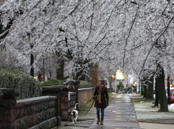 Heather Griffin, of Buffalo, N.Y., and her dog Sal walk beneath ice-covered trees on Sunday in Buffalo.